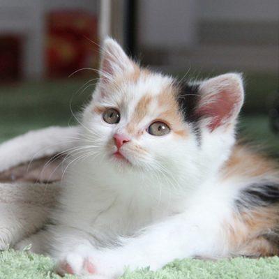 Waarom pleeggezin voor kittens worden?