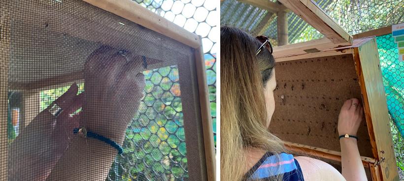 vlindertuin reserva playa tortuga