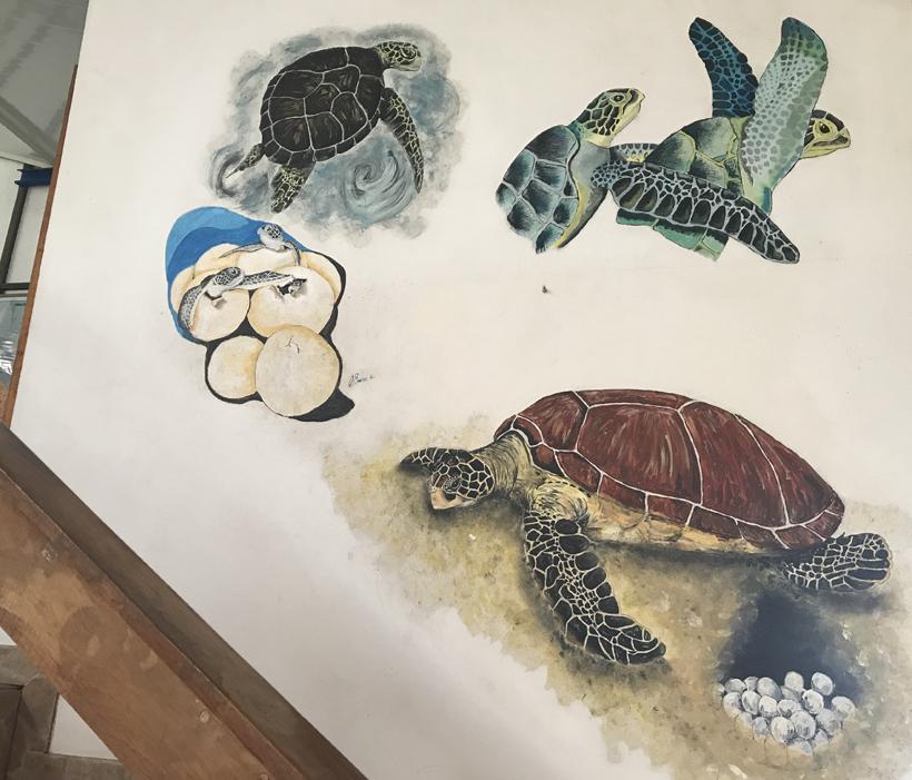schildpadden helpen in costa rica