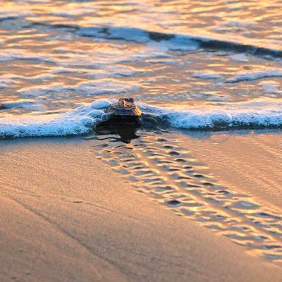 Reserva Playa Tortuga: natuurbehoud en schildpadden helpen