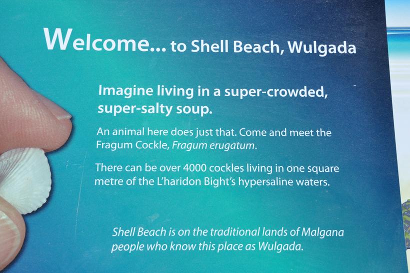 shell beach informatie