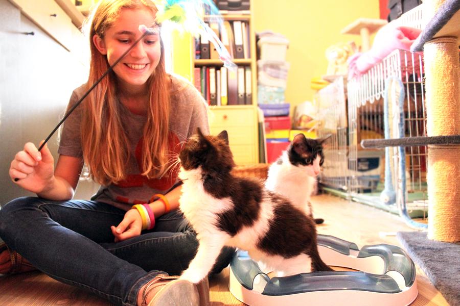 pleeggezin kittens