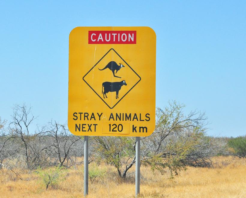 stray animals voor carnarvon