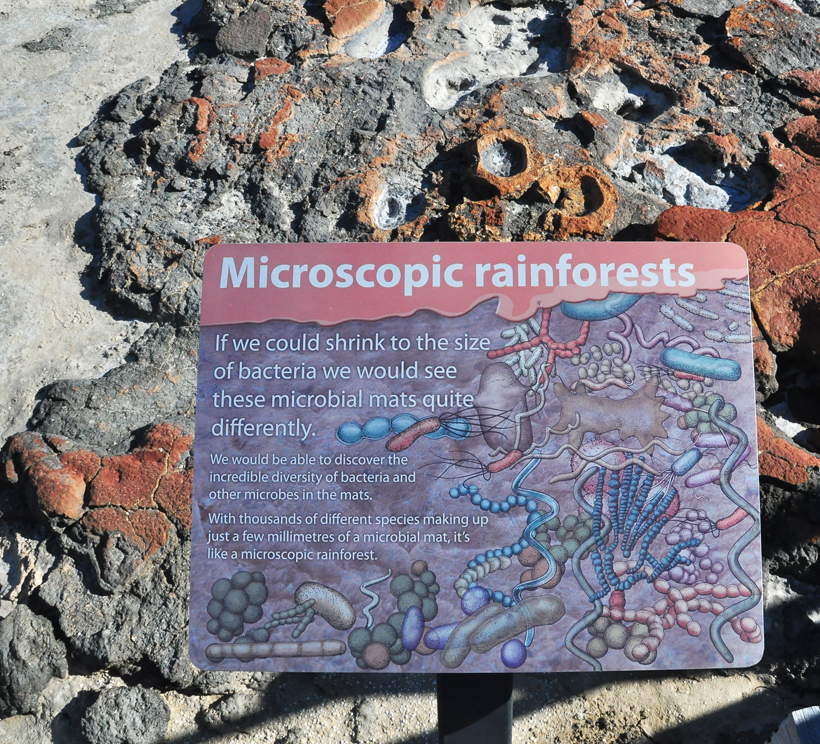 stromatolieten in shark bay