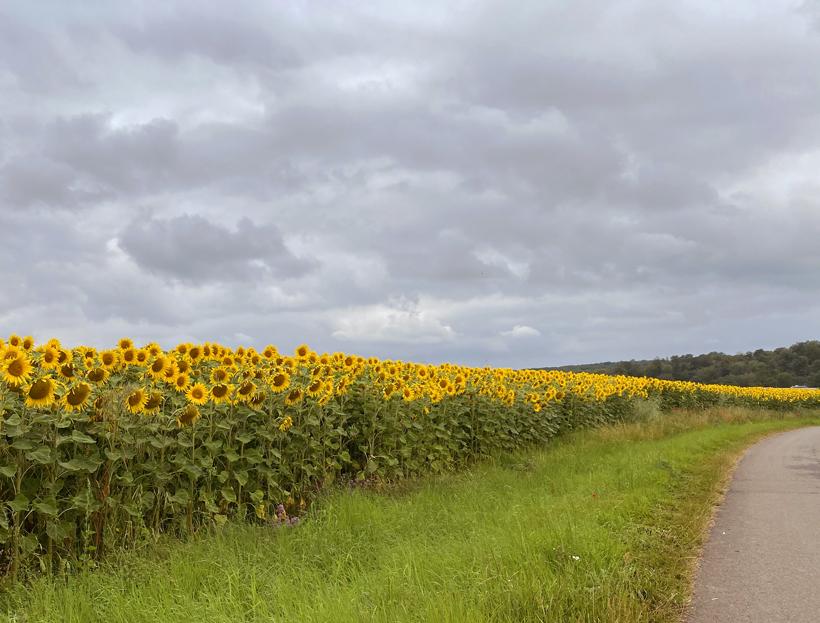 landschap onderweg naar Bourgogne