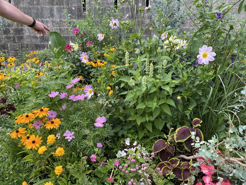bloemen bij stadsmuur toul