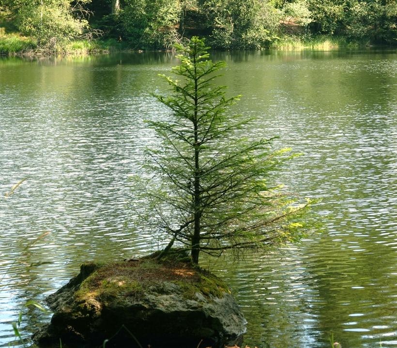 boompje op rots in Lac de la Goulette