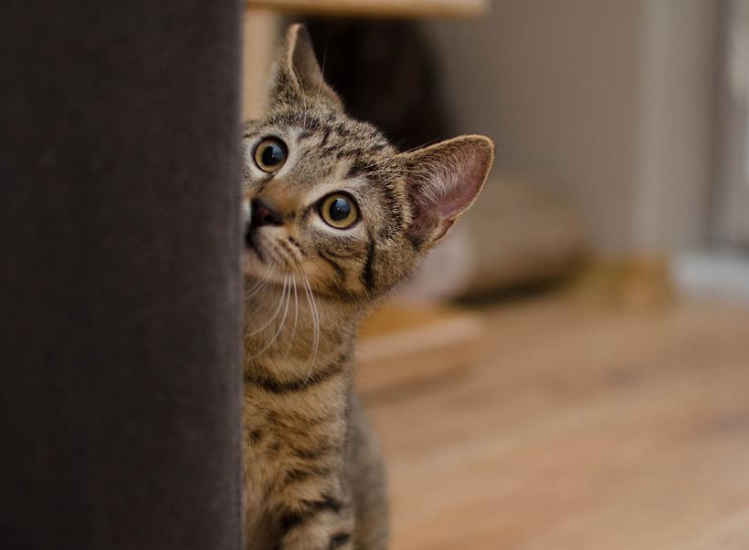 kat verhuizen geuren