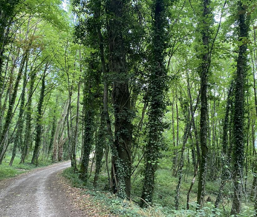 hoge bomen naar toul fort