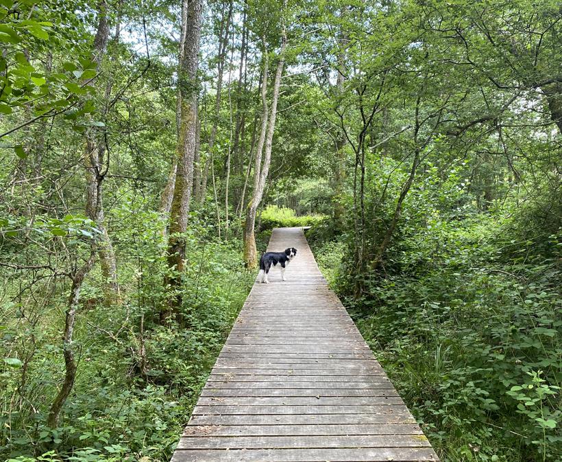 wandeling source de l'Yonne