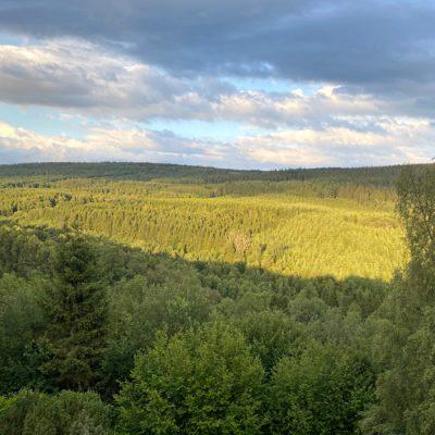 Ardens woud vol wild in Nassogne