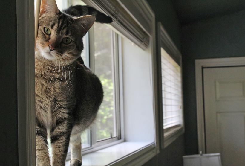 kat verhuizen aparte kamer