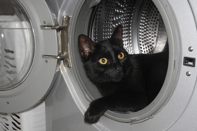 kat verhuizen gevaar