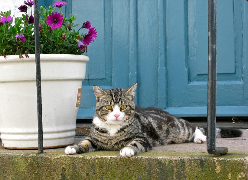 kat verhuizen eerste keer buiten
