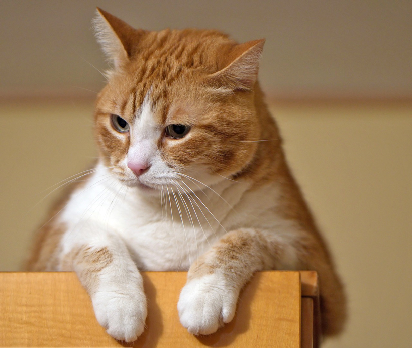omgevingsverrijking kat op hoogte