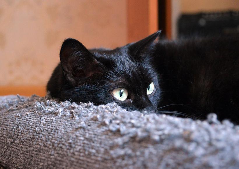 kat verhuizen vertrouwde geur