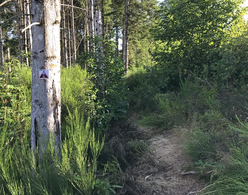 overwoekerd pad naar source yonne mountainbike