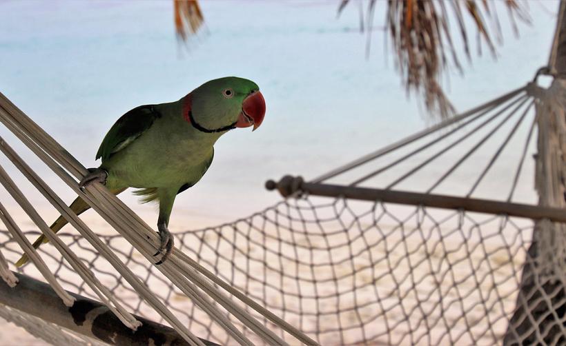 Pura vida in Costa Rica