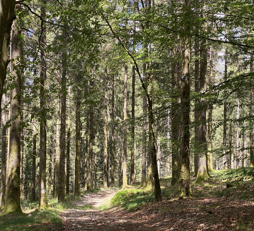 start roze route wandeling haut folin