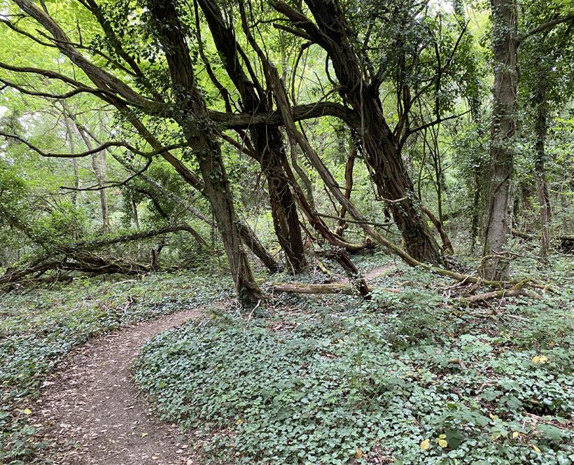 wandelen in Toul bos