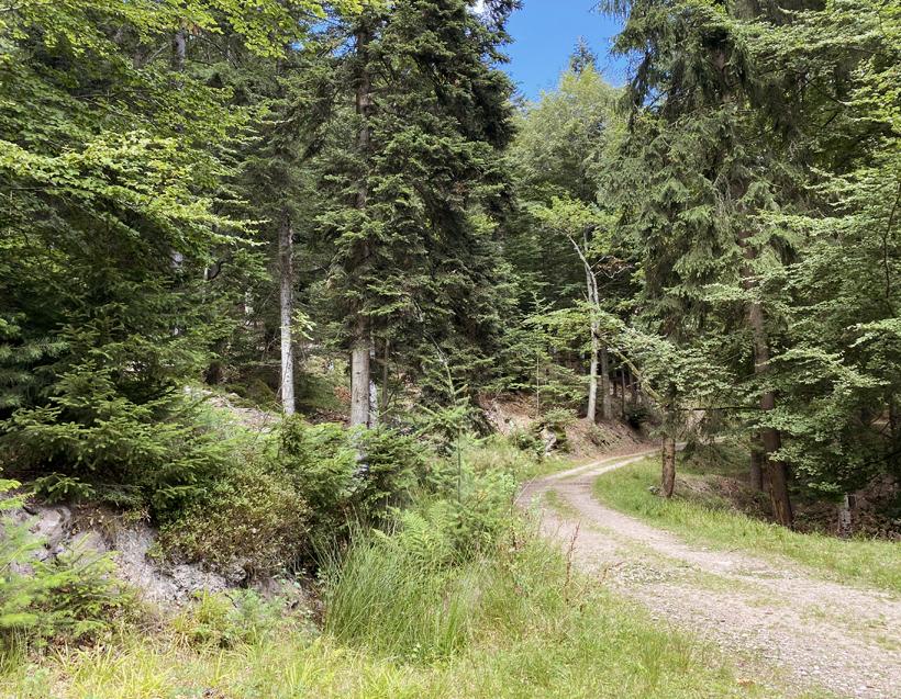 bosweg koenigsstuhl