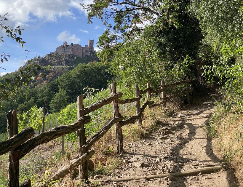 kasteelwandeling in ribeauville
