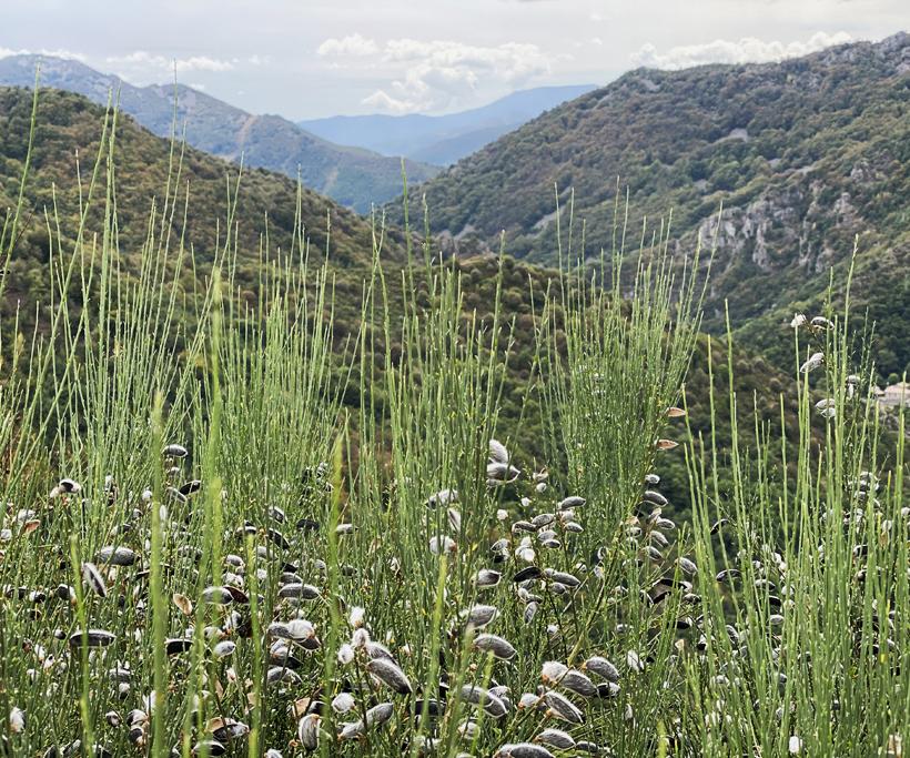 mont d'Ardèche landschap