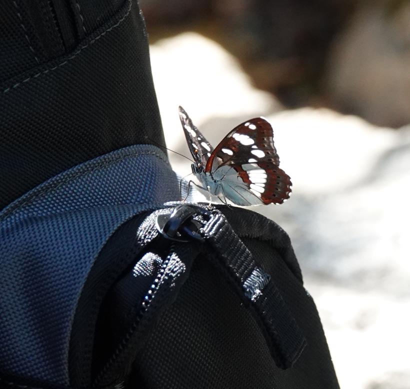 vlinder wandeling bois païolive Ardèche