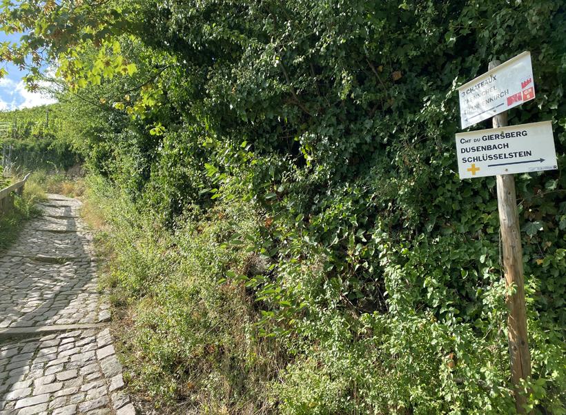 wandeling ribeauville kastelen