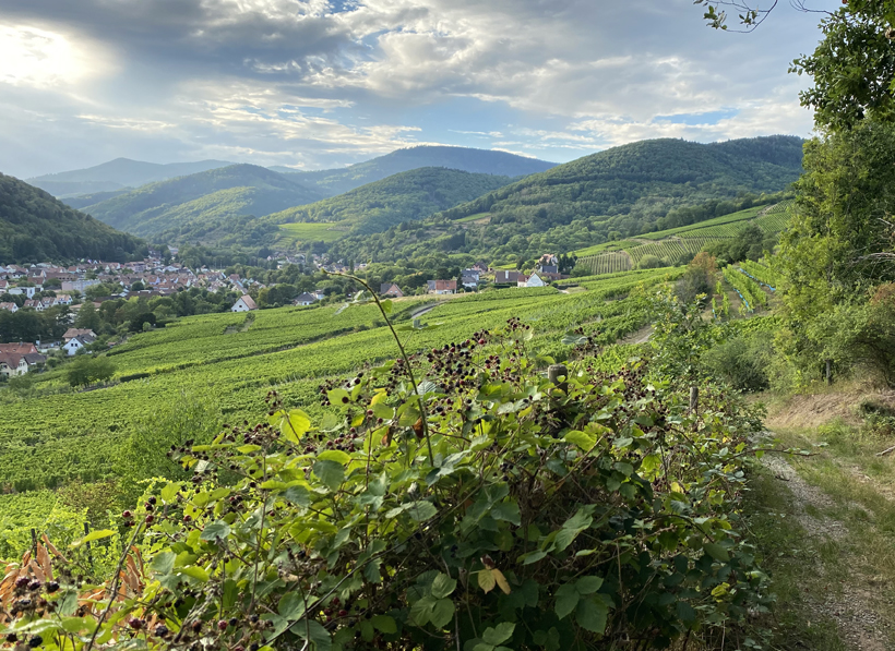 wijngaarden in kayserdal