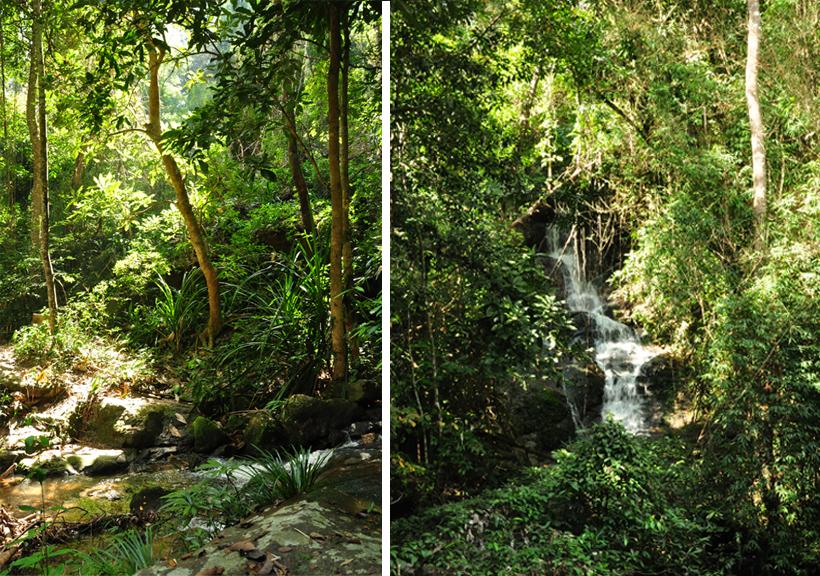jungle bij doi suthep