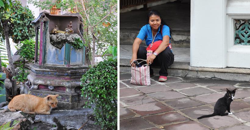 straatkatjes aan Wat Po tempel Bangkok