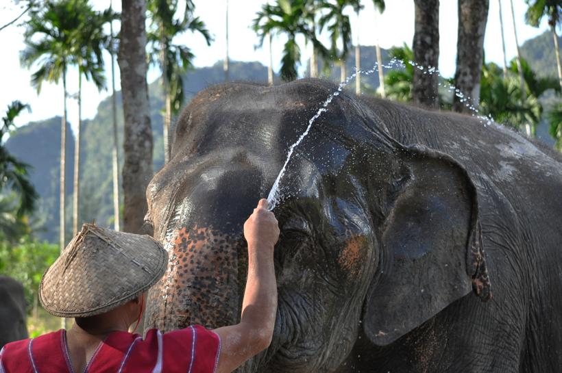 olifanten helpen in Khao Sok