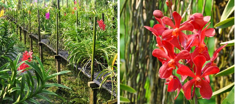 orchideeënkwekerij in Bangkok