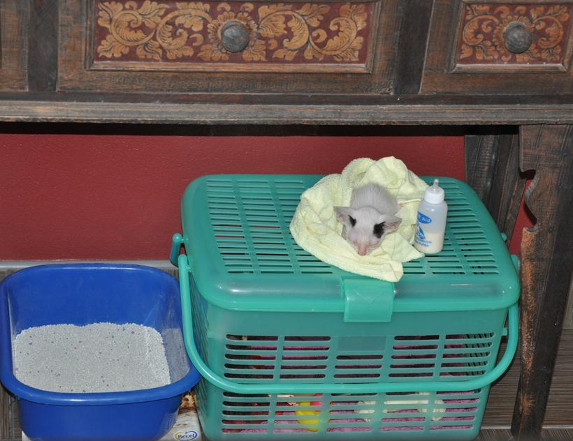 kitten helpen in Thailand