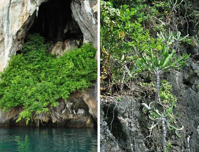 eilandbegroeiing phang nga baai in Zuid-Thailand