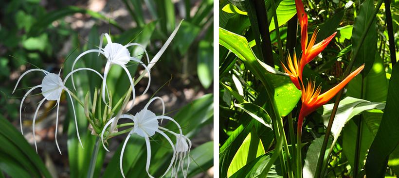 tropische bloemen in Zuid-Thailand