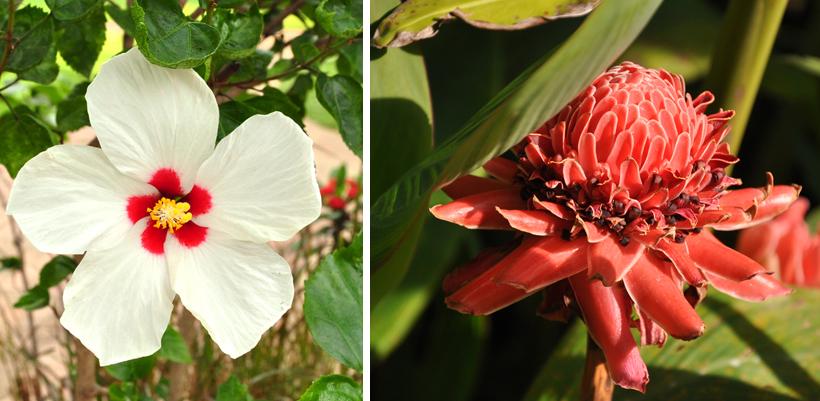 tropische bloemen in Thailand