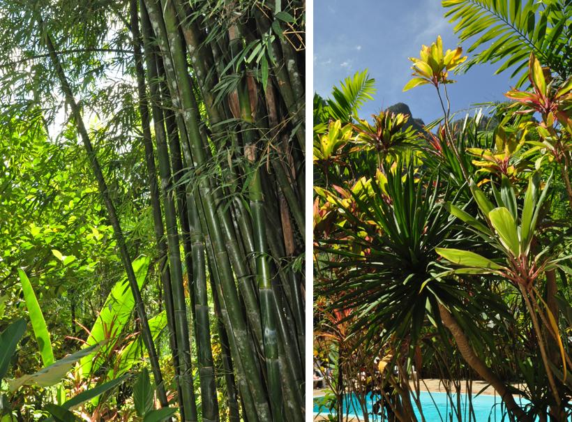 tropische begroeiing in Zuid-Thailand