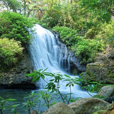 Rondreis Costa Rica 2 of 3 weken: natuur en wildlife