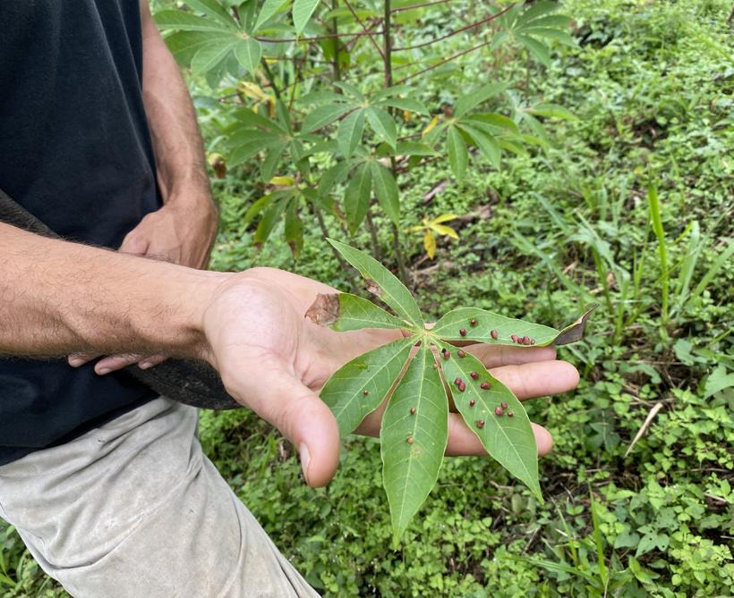 verdediging plant tegen bacteriën en permacultuur Tierra Madre