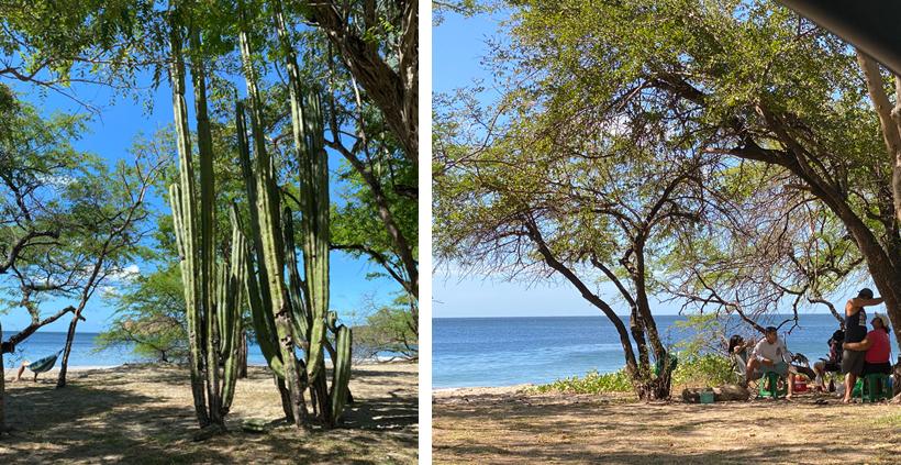 Playa Rajada bomen aan het strand