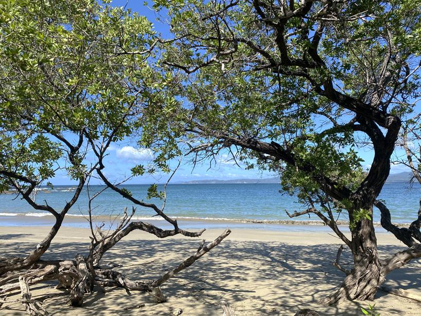 playa rajadita onder de bomen