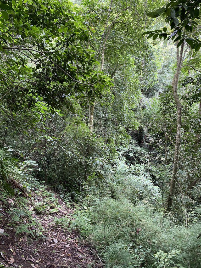weelderige jungle los andes
