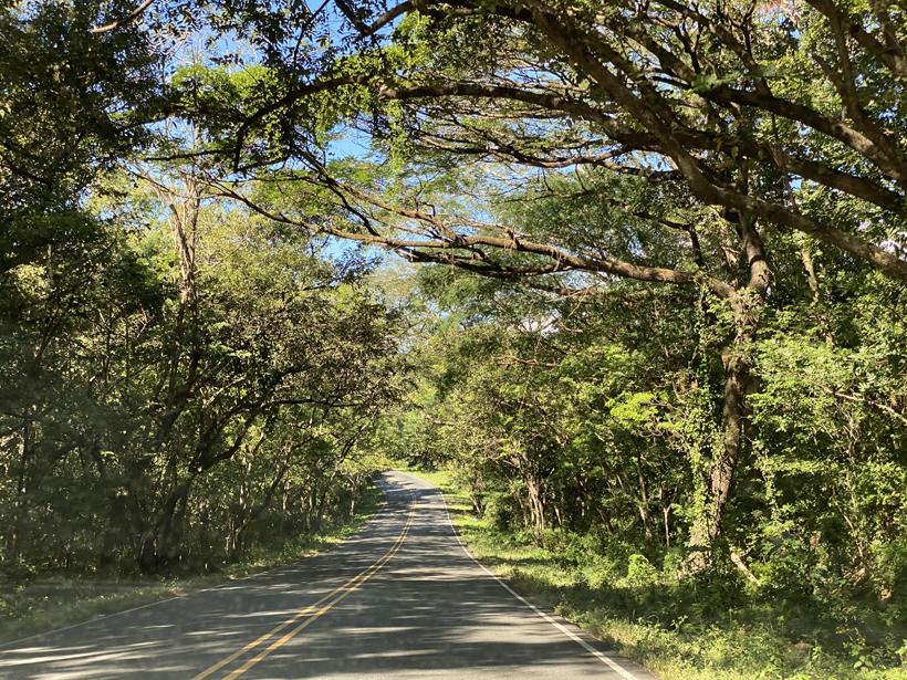 weg onder de bomen naar La Cruz