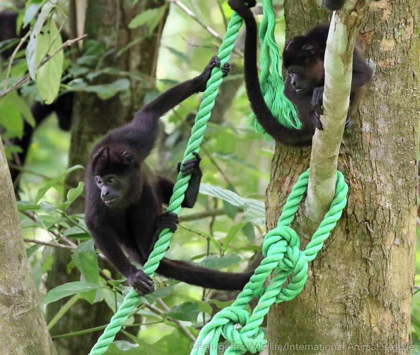 apenbrug in Nosara