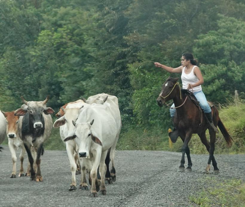 cowgirl in actie guanacaste