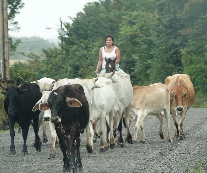 cowgirl op de weg