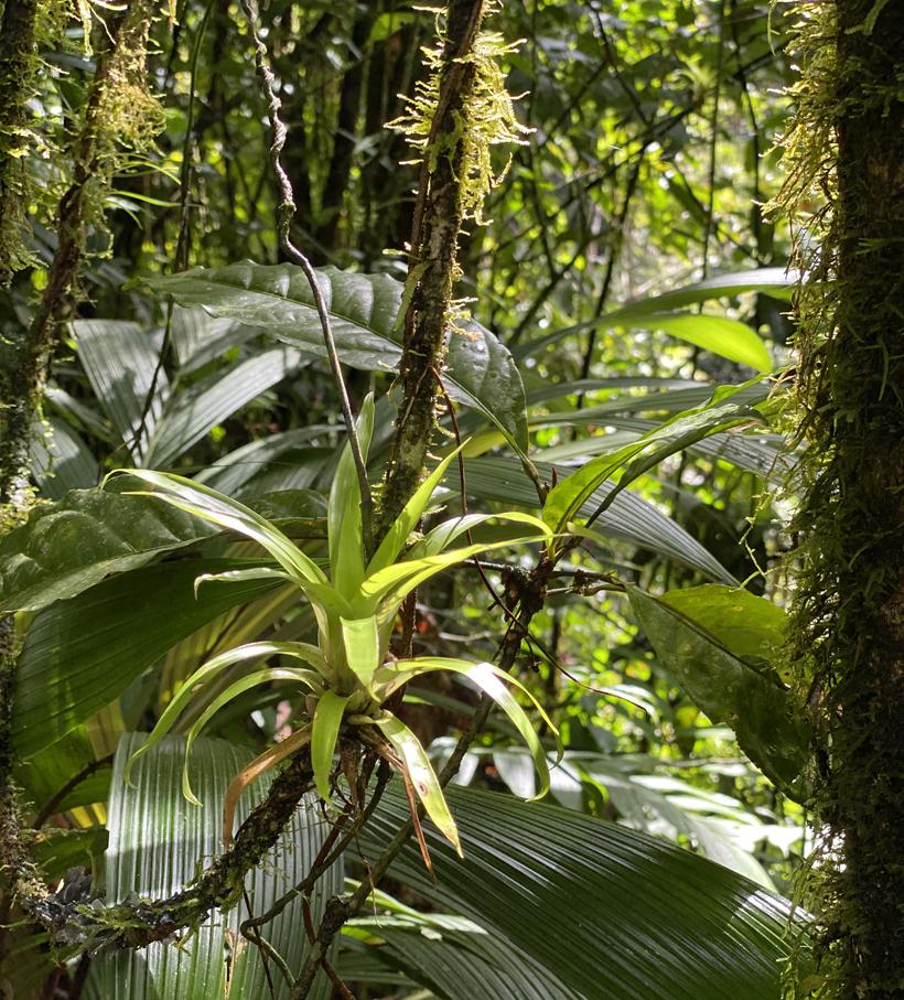 plant op boomstam regenwoud Dos Rios