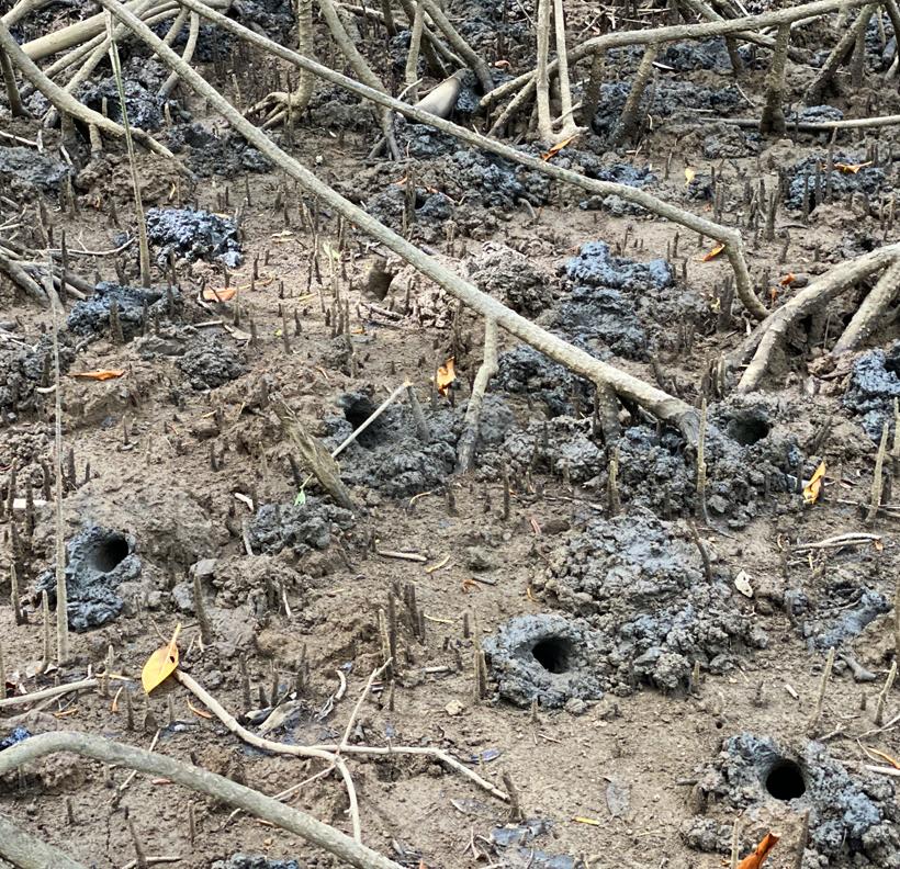 krabben in natuurreservaat Nosara